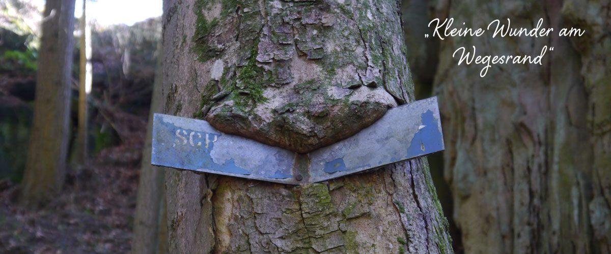 Slider_Tree_Text